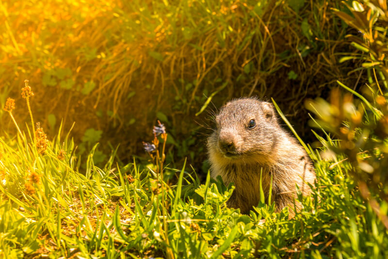 Save energy this Groundhog Day.